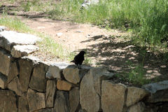 Bird on the Rocks. A brid stands on the rocks above the Santa Fe River Royalty Free Stock Photo