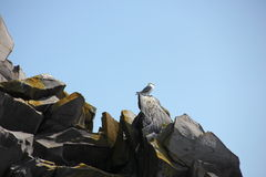 Bird on the rocks Stock Image