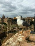 Bird at Rome Forum Royalty Free Stock Images