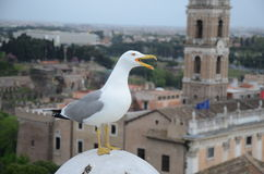 Bird in Rome. A bird in rome with mouth opened Royalty Free Stock Photo