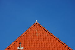 A bird on a roof Royalty Free Stock Photography