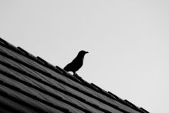 Bird on Roof. A black bird sitting on a roof. This image is completely black and white Stock Image