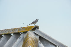Bird on the roof of a house in blue sky. Blue sky, bird on the roof Royalty Free Stock Photography