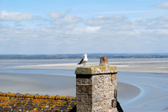 Bird on the roof of old castle. Of Mont-Saint-Michelle in France stock images