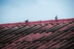 Bird on Roof Stock Photos