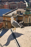 Bird on rooftop of the dome of St. Peter`s Basilica in Vatican. Seagull stands at the end of the roof. Seagull is watching Rome in Royalty Free Stock Photos
