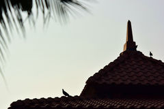 Bird on rooftop Royalty Free Stock Images
