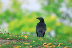 Bird rook Stock Photo