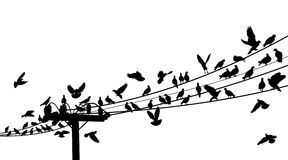 Bird roost. Vector silhouettes of birds roosting on telegraph wires Royalty Free Stock Photography
