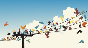 Bird roost Royalty Free Stock Images