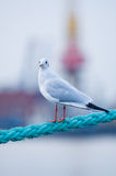 Bird on rope Stock Photo