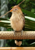 Bird on Rope Royalty Free Stock Photography