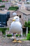 Bird on the ruins of the Roman Forum Stock Image