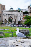 Bird on the ruins of the Roman Forum Royalty Free Stock Images