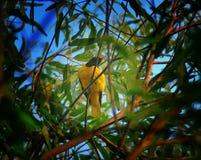 Bird& x27; s zdjęcie royalty free