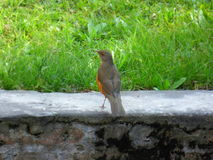 Bird`s back. Isolated bird Royalty Free Stock Photos