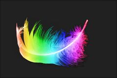 Bird's colorful feather Stock Photography