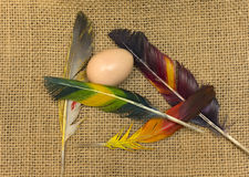 Bird's egg and colored feathers Royalty Free Stock Photography