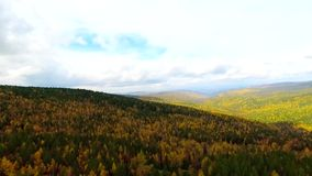 A bird's-eye aerial flight over the road autumn forest. Russia Buryatia stock video