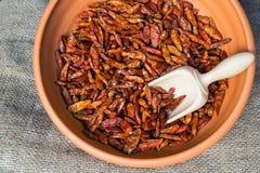 Birds eye chilli pepper Stock Images