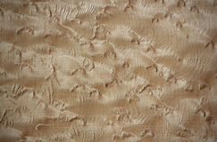 Bird's eye maple wood surface Stock Photography