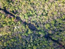 A bird`s eye view from drone on diagonally Forest Road. Royalty Free Stock Photography