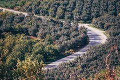A Bird`s Eye View of Fields with Trees in iznik. A bird`s eye view of fields with olive and other fruit trees in iznik, Turkey royalty free stock images