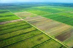 Bird`s-eye view of the fields with water channels, taken from the plane. Suburb of Georgetown, Guyana stock image