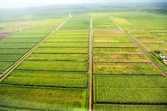 Bird`s-eye view of the fields with water channels, taken from the plane. Suburb of Georgetown, Guyana royalty free stock photography
