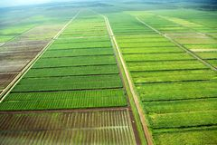 Bird`s-eye view of the fields with water channels, taken from the plane, suburb of Georgetown. Guyana royalty free stock images