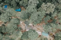 Bird's-eye View of Forest royalty free stock images