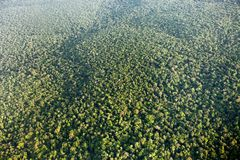 Bird`s-eye view of the jungle, taken from the plane. Guyana royalty free stock photo