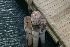Bird`s-eye view of old dock pilings, next to a wooden jetty at the Point Judith pier, Rhodes Island royalty free stock photo