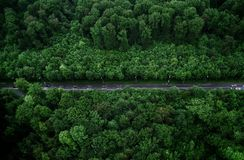 Bird's-eye View Photo of Road With Trees stock images