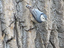 Bird's Eye View. This photo was taken in Maryland, near a bird-feeder Stock Images