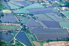 Bird's-eye view on  rice fields Bangkok vicinity Royalty Free Stock Photo