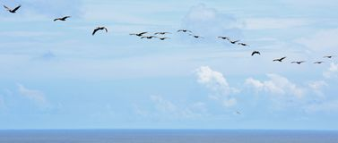 Bird`s Eye View from Top of Hunting Island Lighthouse royalty free stock photography