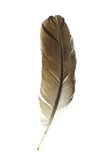 Bird's feather Royalty Free Stock Photography