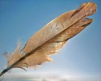 Bird Feather. A bird feather held before sun and sky in background Royalty Free Stock Images