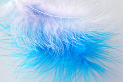 Bird's feathers Stock Image