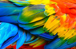 Bird`s feathers. Close up of Scarlet macaw bird`s feathers Royalty Free Stock Images