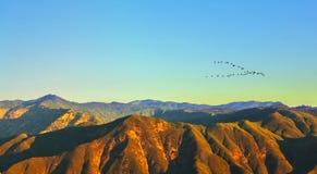 The bird's flight above pass Tioga Stock Image