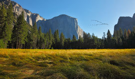 The bird's flight in  Yosemite park. Stock Photography