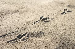 Bird's footprint Stock Photography