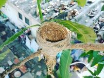 Bird& x27; s gniazdeczko zdjęcia stock
