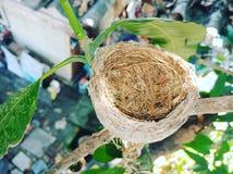 Bird& x27; s gniazdeczko zdjęcie royalty free