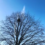 Bird& x27; s gniazdeczko w drzewie Fotografia Royalty Free