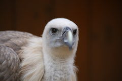 Bird´s head. Close-up view of the head of a bird Stock Photos