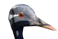 The bird's head Stock Photos