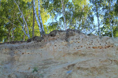 Bird's holes nests in slopes on the bank of the Baltic Sea in Kulikovo, Kaliningrad region. KULIKOVO, RUSSIA — JULY 19, 2014: Bird's holes nests in slopes on Royalty Free Stock Images